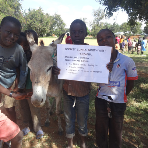 TAWESO Donkey Welfare Outreach Clinic, Lake Zone, Tanzania
