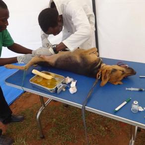 Uganda SPCA: 2015 Report