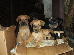 Puppies placed in a box and dumped