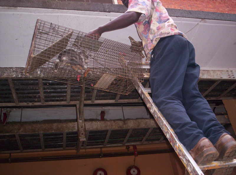 January 2014-Alex rescues a cat from a roof
