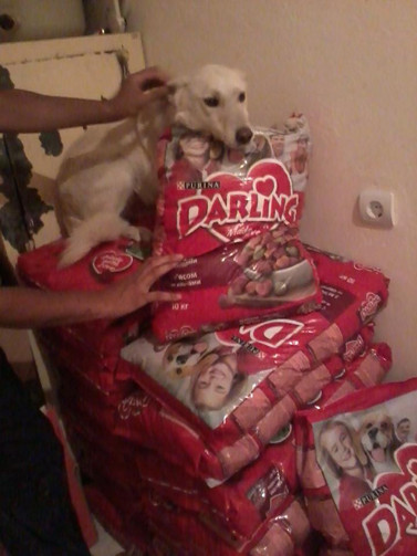 Dry dog food bought with AKI $