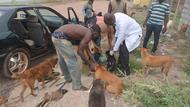 Sept 12 rabies clinic drive up.JPG