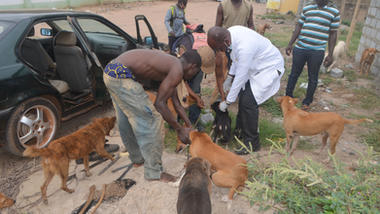 Sept 12 rabies clinic drive up.JPG
