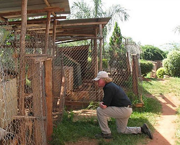 international animal welfare