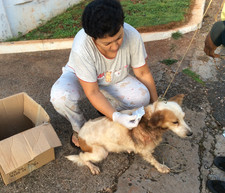 Mama dog getting help