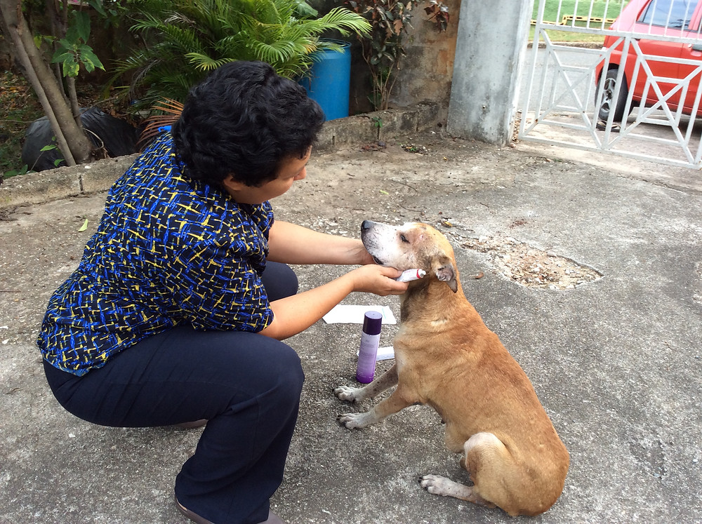 Deborah treats the cuts and scrapes on this dog that was hit by a car