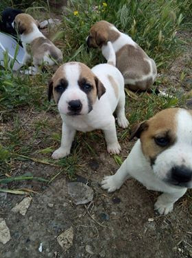 5 puppies and mama dumped outside the SAA shelter