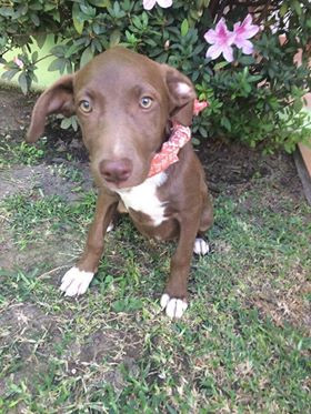 Dory adopted!