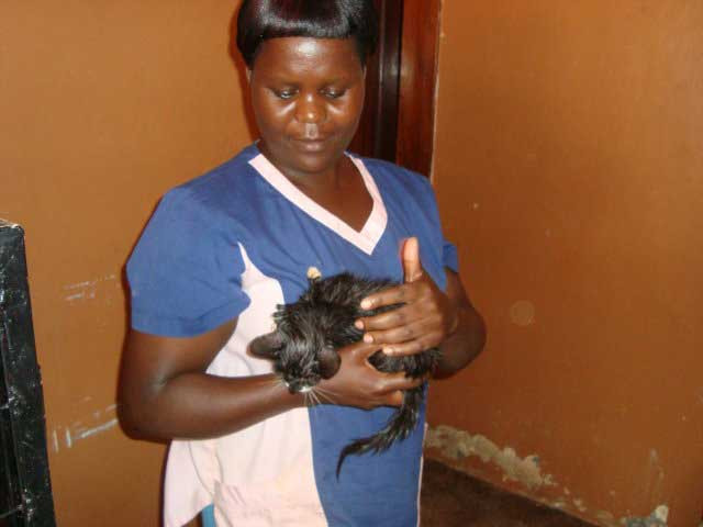 Mary comforting kitten rescued from a latrine