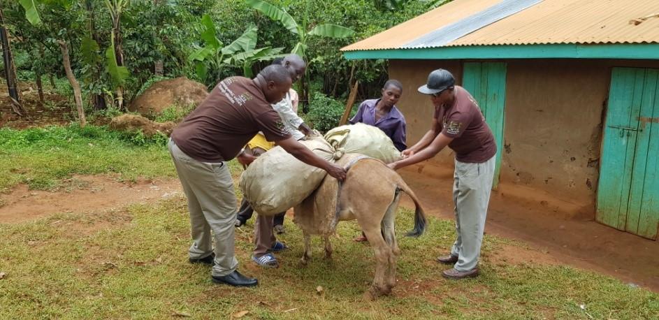 overloaded donkey