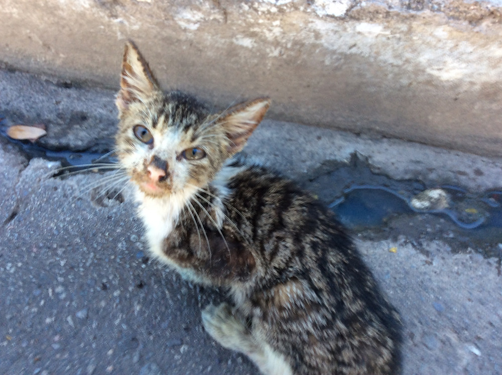 Kitty found on the street, hungry and weak
