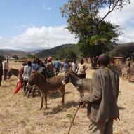 donkey clinic at village 1.JPG