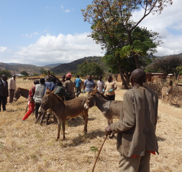 donkey clinic at village 1.JPG