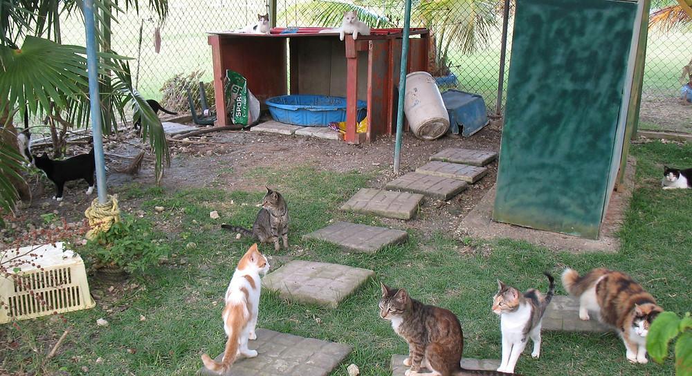 Happy cats at Hope Sanctuary
