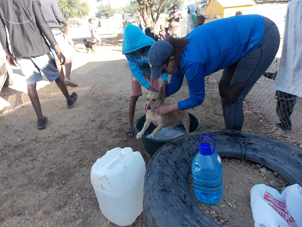 Not the happiest time for Katutura dogs