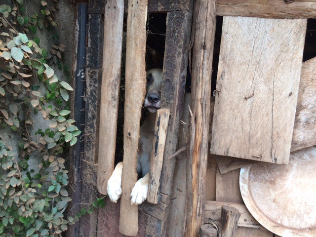 Dog was locked in this dog house-until USPCA rescued him