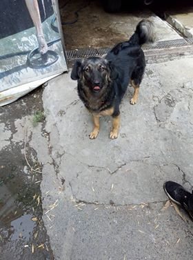 SAA dog-went to a home in Dallas, Texas, USA