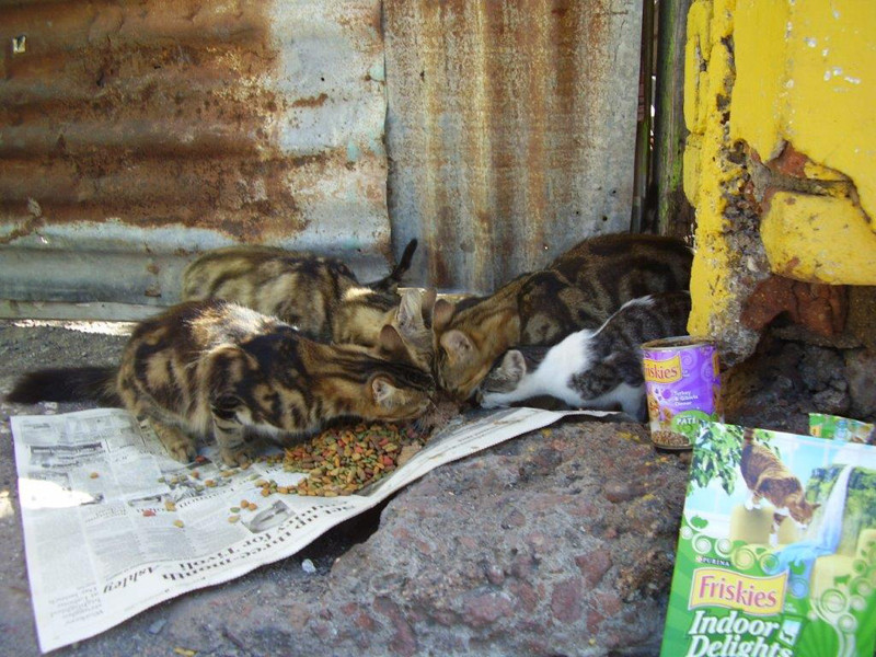 Typical street cat feeding station