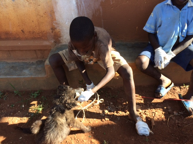 After being rescued from a pit latrine, Vodka gets a bath