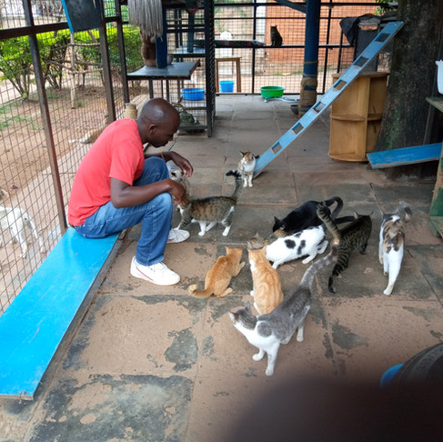 Uganda Society for the Protection & Care of Animals Loves their Cats!