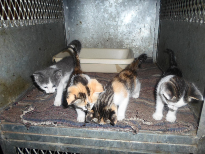 January 2014 rescues