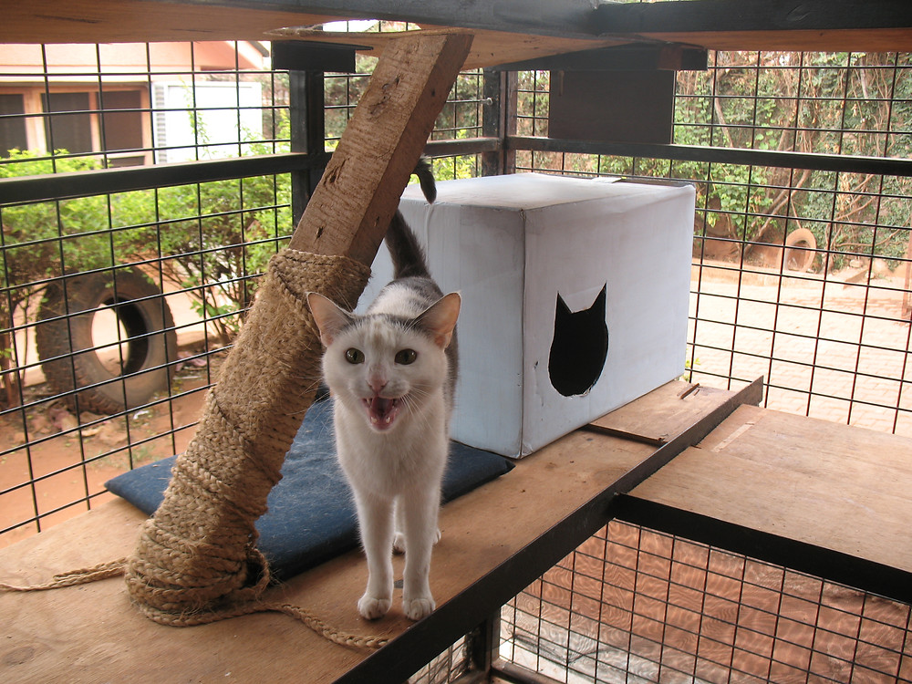 The cats are enjoying the new cattery