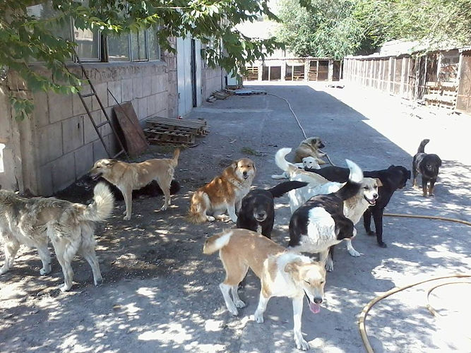 Dogs at the shelter in March.jpg