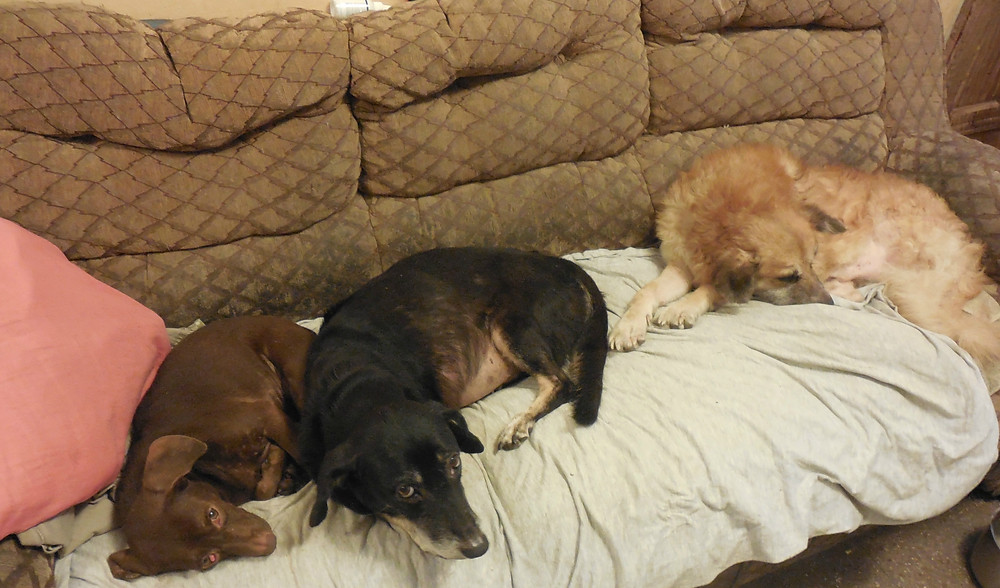 Dobby, Molly, & Odie, staying warm and comfortable on a cool day in Tegucigalpa
