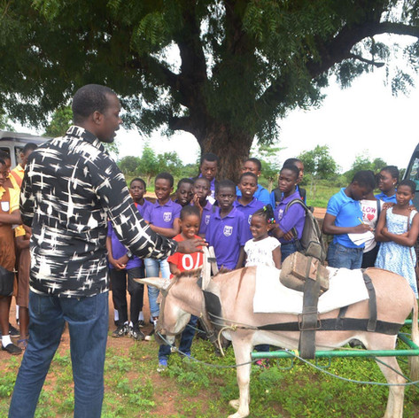 Students learn about donkeys