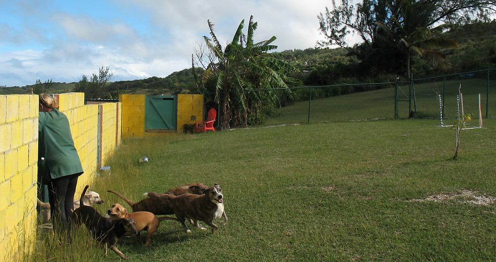 Dogs are let out of their pen for play time!