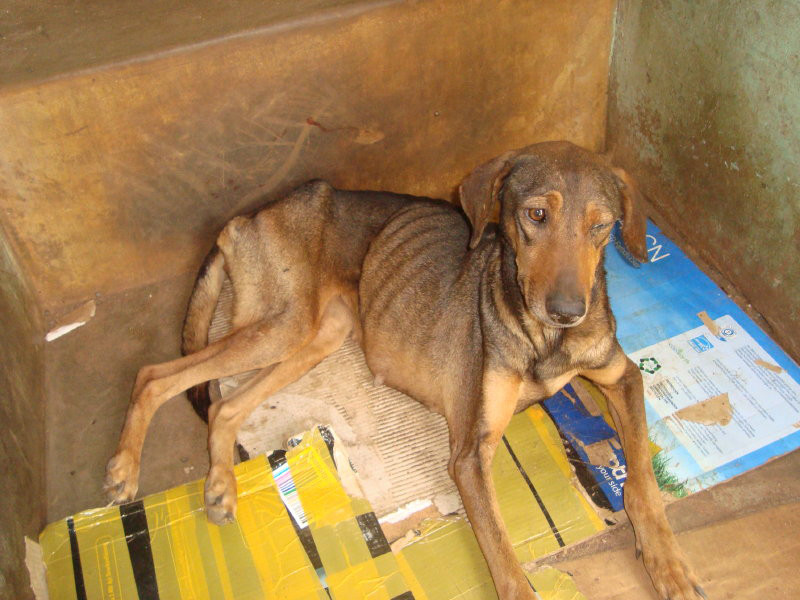 Rescued from a home in Ntinda