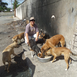 KCAW Eases the Lives of Kingston's Street Dogs & Cats