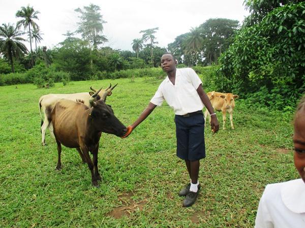 Student-led livestock welfare campaign