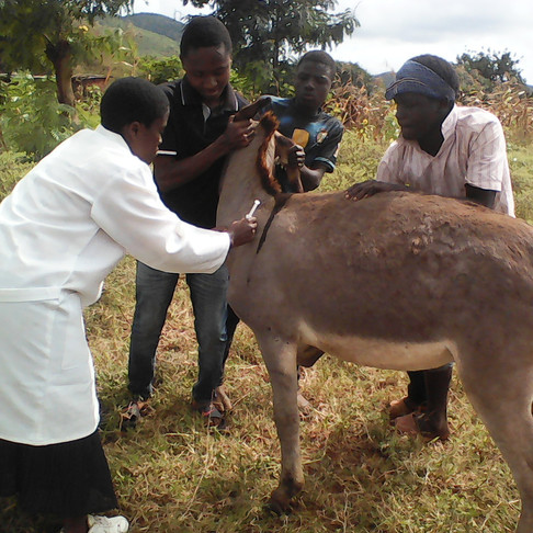 Donkey Vet Clinic Supported by AKI Donors!