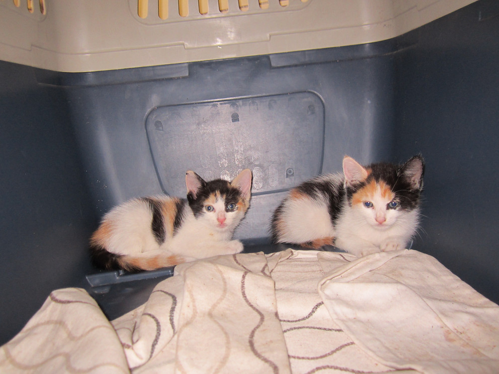 Deborah rescued 3 kittens from a man who was going to throw them in the sea