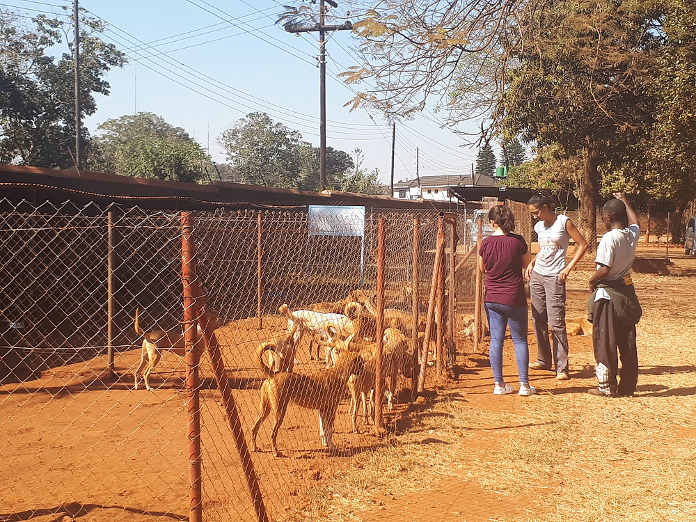 All Creatures shelter in Lilongwe, Malawi