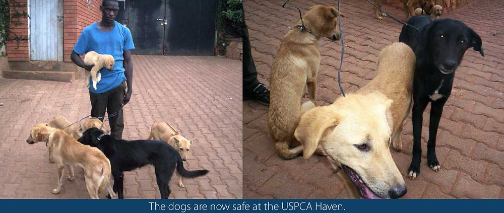 Dogs left to die!-but rescued and brough to The Haven