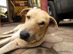 Logan, an old street dog