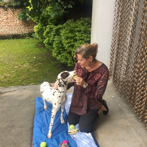 KETI, the Dalmatian with a new lease on life