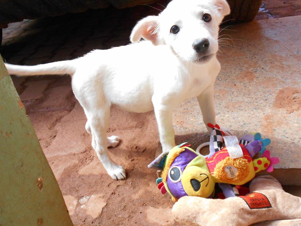 Bella, a healthy puppy at 10-11 weeks old
