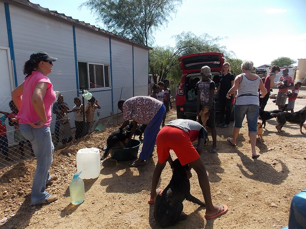 Dipping dogs in Katutura (November)