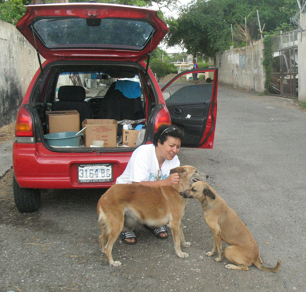 On the right, oldest street dog, Susie