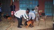 rabies clinic Sept at Dome Konka.JPG