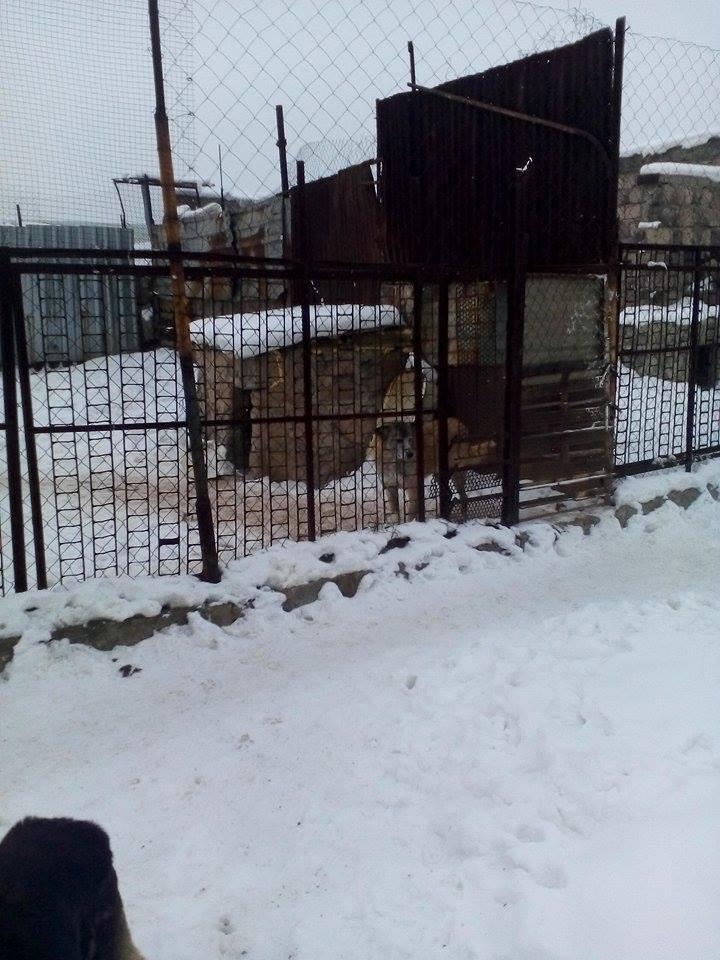 It's a snowy, cold winter in Yerevan!