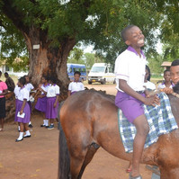 Field trip: the 1st time on a horse!