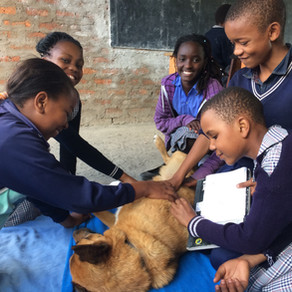 Dogs were at best tolerated, at worst despised: How an American teacher in Tanzania changed hearts a