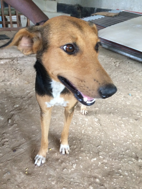 Chloe-rescued and rehomed