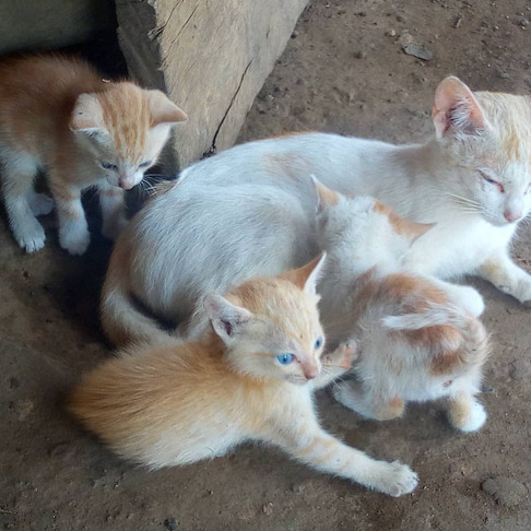 How Your Support to AKI is Helping Liberia Animal Welfare & Conservation Society
