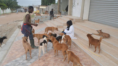 Sept 12 rabies clinic 113 dogs and cats