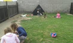 Walvis Bay SPCA dog yard